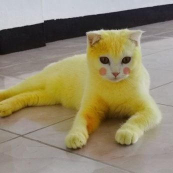 Katę ciberžole gydžiusi šeimininkė nustebino pasaulį – augintinė virto Pikachu