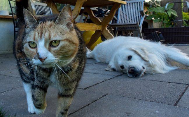 """Mylėti gali ne tik kačiukai ir šuniukai: paneigė mitus apie """"senjorus"""""""