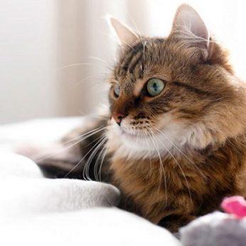 Patarimai, kad katė namie būtų sveika ir laiminga