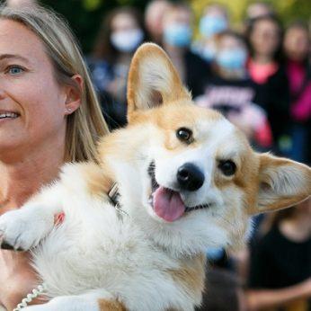 Sparčiai populiarėjantys korgiai – itin prie šeimininko prisitaikantys šunys