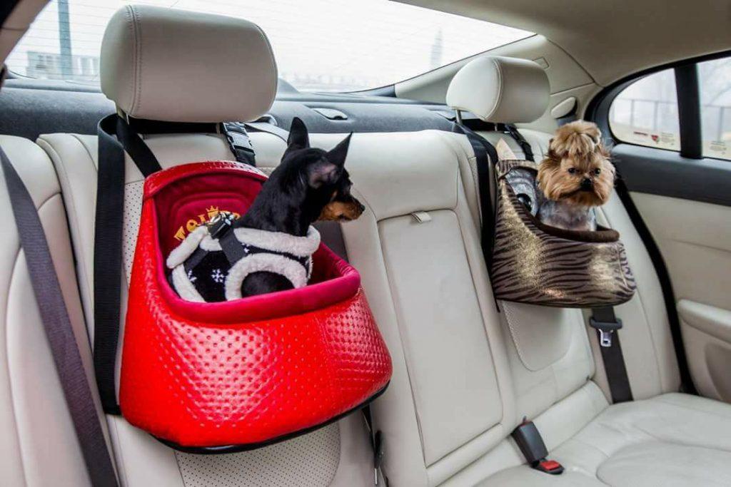 Toitert universalios automobilinės kėdutės šunims