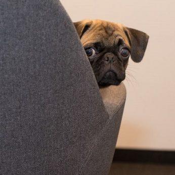 Ar šuo geresnis kolega nei žmogus?