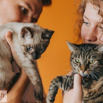 Du katinėliai iš prieglaudos tapo geriausiais draugais išsirinkti padėjo išsigandusios, bet švelnios akys