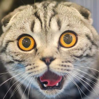 Faktai apie kates, kurių dar nežinojote