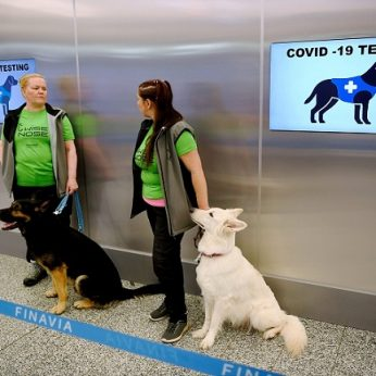 Helsinkio oro uoste pradedami naudoti COVID-19 pacientų kvapą atpažinti išmokyti šunys