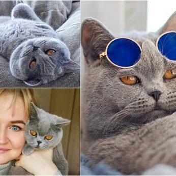 """""""Instagram"""" žvaigžde tapusi alytiškės katė skanėstams užsidirba pati"""