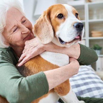 Koks šuns amžius palyginus su žmogumi? Mokslininkai paaiškino, kaip apskaičiuoti