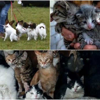Pasakė, kodėl 1,150 mln. kačių arba šunų laikantys lietuviai nemyli gyvūnų