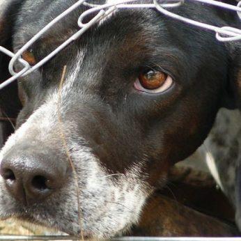 """Startavo iniciatyva """"Laisvė gyvūnams"""": bus siekiama suardyti Lietuvoje išsikerojusį gyvūnų koncentracijos stovyklų tinklą"""