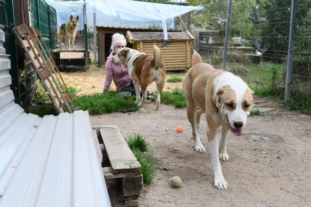 """Širvintų r. buvusios veisyklos dalis paimtų šunų kol kas gyvena prieglaudoje """"SOS gyvūnai"""". V.Skaraičio nuotr."""