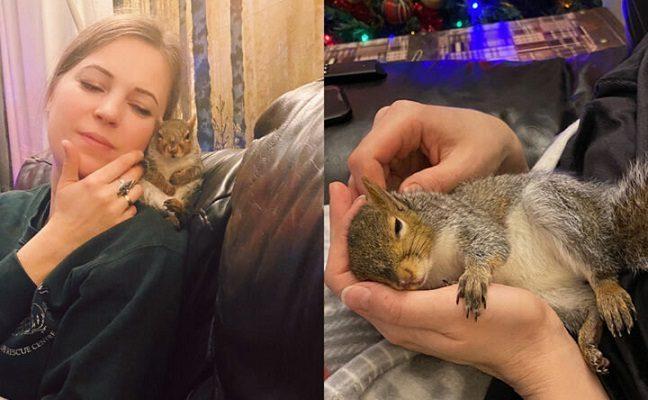 Živilės namuose įsikūrusi voverytė Stasytė tapo šeimos nare: čia turės pasilikti visam laikui