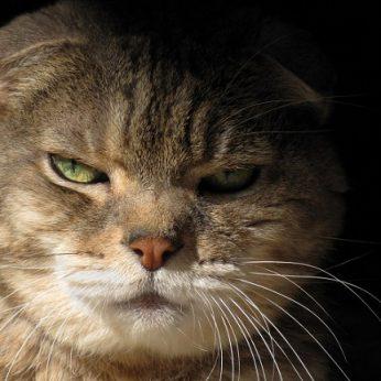 Atsargiai katė! Penkios kačių rūšys, padėsiančios apsaugoti jūsų namus