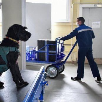 Eksperimentas su COVID-19 užuodžiančiais šunimis davė teigiamų rezultatų