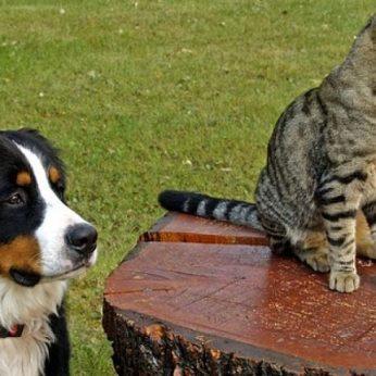 Gyvūnų psichologijos įdomybės