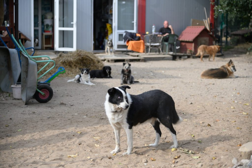 """Iš Širvintų r. buvusios veisyklos dalis paimtų šunų kol kas gyvena prieglaudoje """"SOS gyvūnai"""". V.Skaraičio nuotr."""
