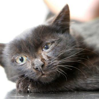 Katė pradėjo elgtis keistai? Požymiai, kad jūsų augintinis serga