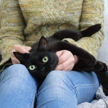 Katinas daugiau kaip 50 kartų išgelbėjo savo šeimininkei gyvybę