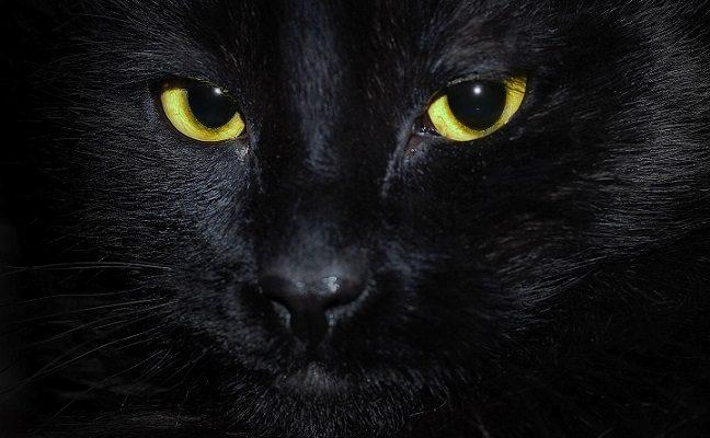 Katinas, kuris prisikėlė iš numirusiųjų