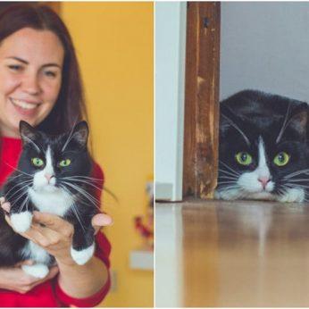 Miške dėžėje mirti palikta katytė savo naują šeimą kas rytą apipila bučiniais