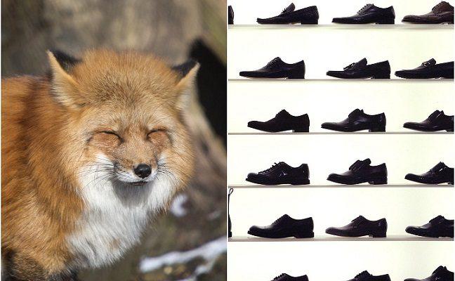 Supratęs, kas pavogė 100 batų porų, vyras negalėjo patikėti