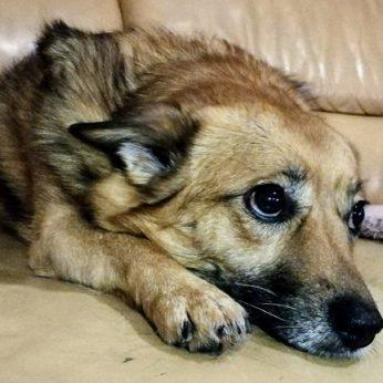 Vilniuje namo kieme rastas nukankinto šuns kūnas