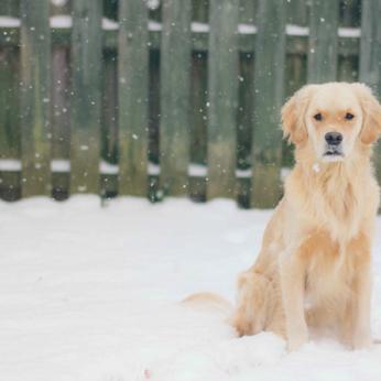 Kaip lauke gyvenančiam šuniui padėti ištverti žiemą