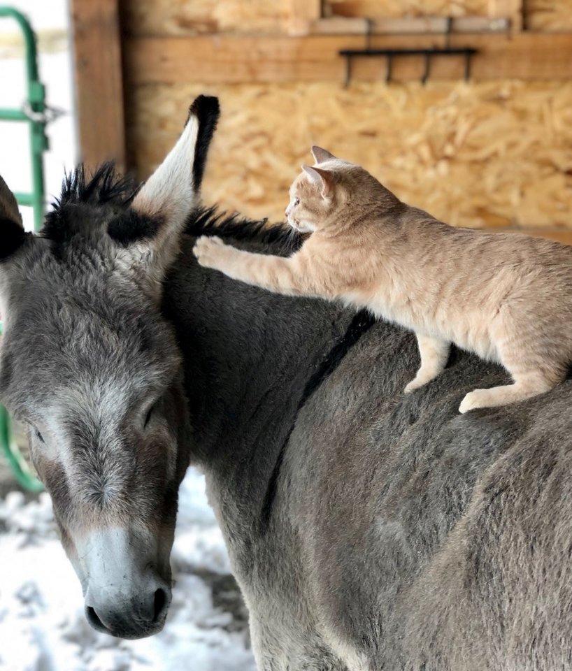 Katė ir asilas įrodė – draugystė tarp šių gyvūnų įmanoma. Wistar Hart / SWNS/Scanpix nuotr.