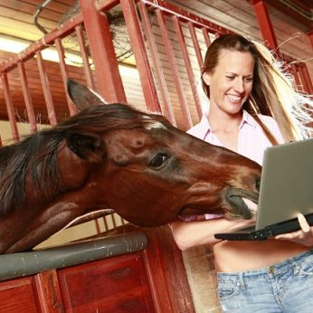 Patikrino, ar arkliai sugeba atpažinti savo šeimininkų veidus