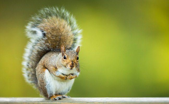 5 dar negirdėti faktai apie voveres