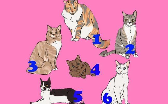 Kuri katė gražiausia, Tai atskleidžia jūsų charakterį