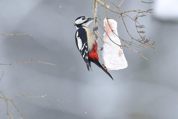 Mėgstantiems žiemą lesinti paukščius – specialisto patarimas: kaip teisingai tai daryti?