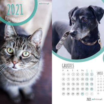 """Projekto """"neBrisius.lt"""" 2021 metų kalendorius: šiemet jį papuošė ištikimų šeimininkų laukiančių beglobių nuotraukos"""