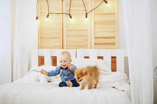 Šeimos pagausėjimas: kaip supažindinti šunį su nauju šeimos nariu?