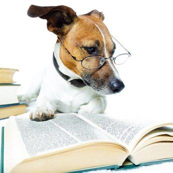 Šunys niekada nekalbės žmonių kalba. Štai kodėl taip yra