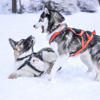 10 specialistų patarimų, kaip tinkamai prižiūrėti gyvūnus žiemos metu