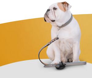 20 proc akcija pirmam apsilankymui šunų viešbutyje