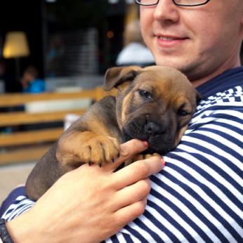 Grynaveislį šuniuką nusipirkti per skelbimą bandžiusi vilnietė buvo šokiruota: liko ir be pinigų, ir be augintinio