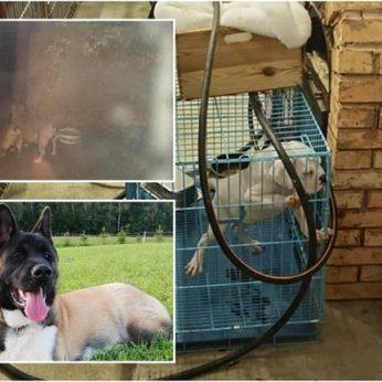 Gyvūnų daugyklų skandalas nebaigtas, nerimo kelia brangių šunų dingimai Lietuvoje