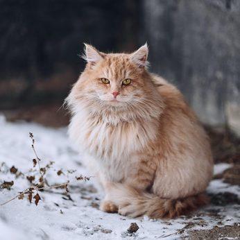 Kaip padėti lauke gyvenantiems gyvūnams esant dideliems šalčiams bei kurkreiptis nutikus nelaimei?