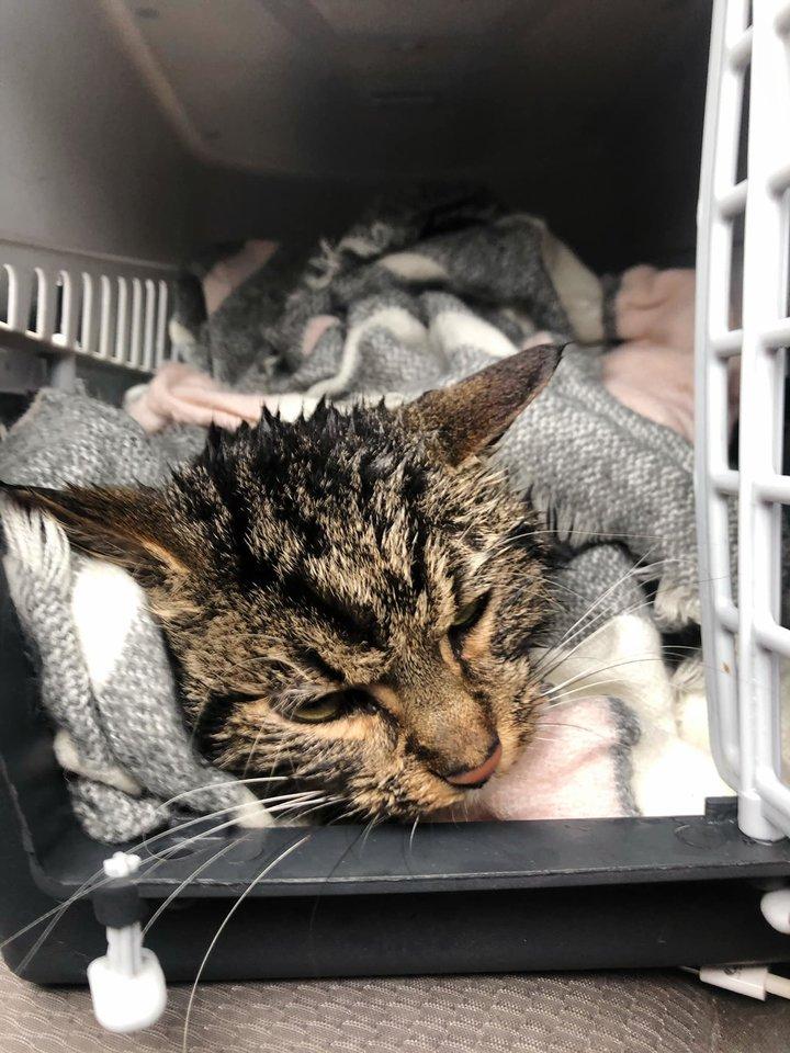 """Katinas buvo toks sušąlęs, kad termometras nefiksavo jo temperatūros. """"SOS gyvūnai"""" nuotr."""
