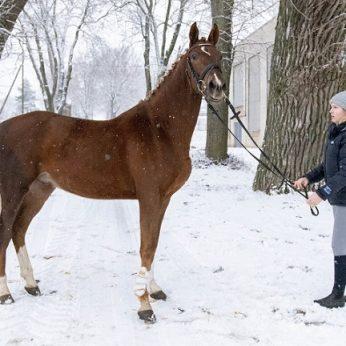 """Per karantiną pagalbos prireikė ir žirgams: """"Arkliui juk nepaaiškinsi, kad dabar karantinas"""""""