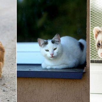 Pritarė siūlymui įteisinti privalomą kačių, šunų ir šeškų ženklinimą