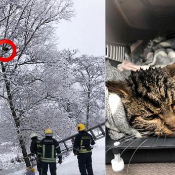 Rainio nuotykiai – iš medžio nėrė į ledinį tvenkinį šgelbėjus termometras nerodė kūno temperatūros