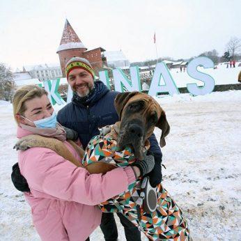 Įspūdingo šuns šeimininkai sulaukia netikėčiausių reakcijų – Lietuvoje tokių keturkojų yra tik apie penkiolika