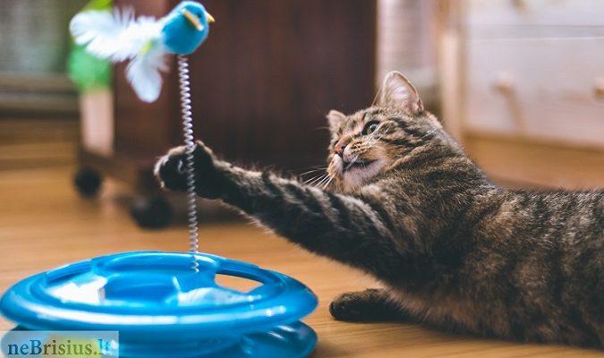 Žaislai katėms – ne tik pramoga, bet ir pagalba rūpinantis katės fizine bei emocine būkle1