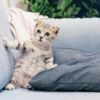 11 keisčiausių daiktų, kurių katės bijo pasirodo, viską galima paaiškinti