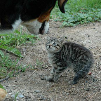 Augintinių kūno kalbos skirtumai, arba kodėl šuo ir katė nesutaria