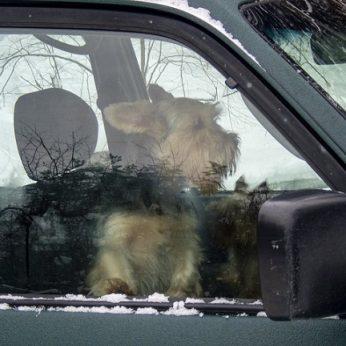 Iš daugintojų Šiaulių r. už žiaurų elgesį su gyvūnais konfiskuoti visi šunys