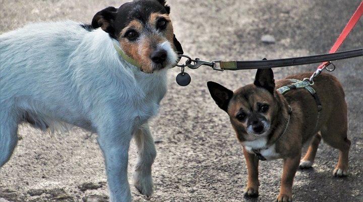 Patarė, kaip išvengti augintinio agresijos: šis veiksmingas metodas labai patiks jūsų šuniukui
