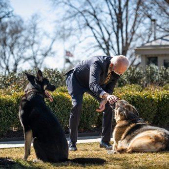 Šunys vėl laksto Baltuosiuose rūmuose: po dresūros pamokų grįžo pas šeimininkus